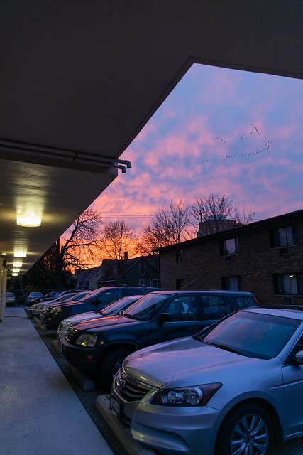Birds over parking lot at sunset