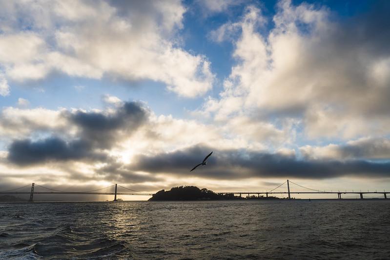 Two Bay Bridges, One Birdo.