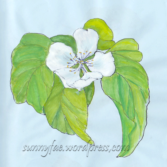 Gouache quince flower