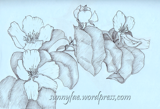 quince flowers drawn with a fountain pen