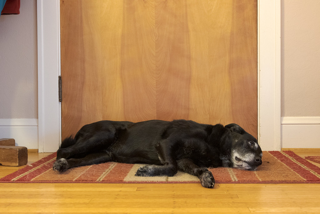 Our dog Ellie lies on the throw rug in front of the door in October 2014