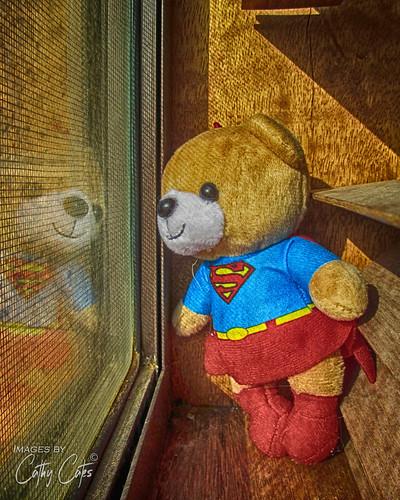 Super Girl Bear