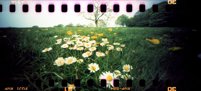 Down among the daisies