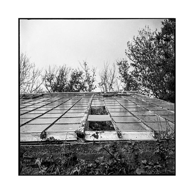 greenhouse 1 • guernsey • 2019