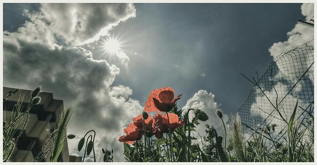 Por muy larga que sea la tormenta el sol vuelve a brillar entre las nubes.