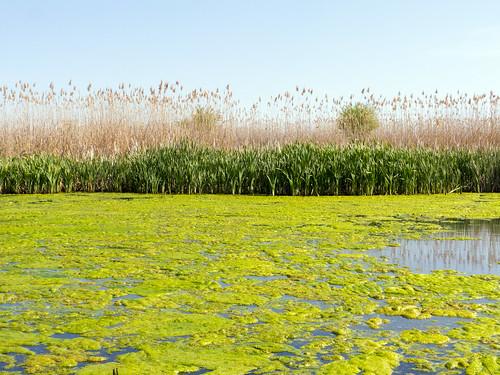 landscape ilfov românia pond nature colors outdoor lake water