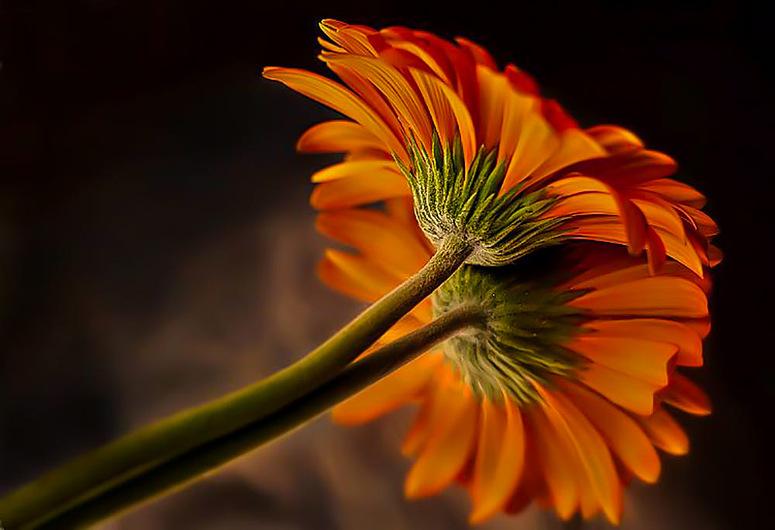 Fotografia em Palavras: Flores em macro