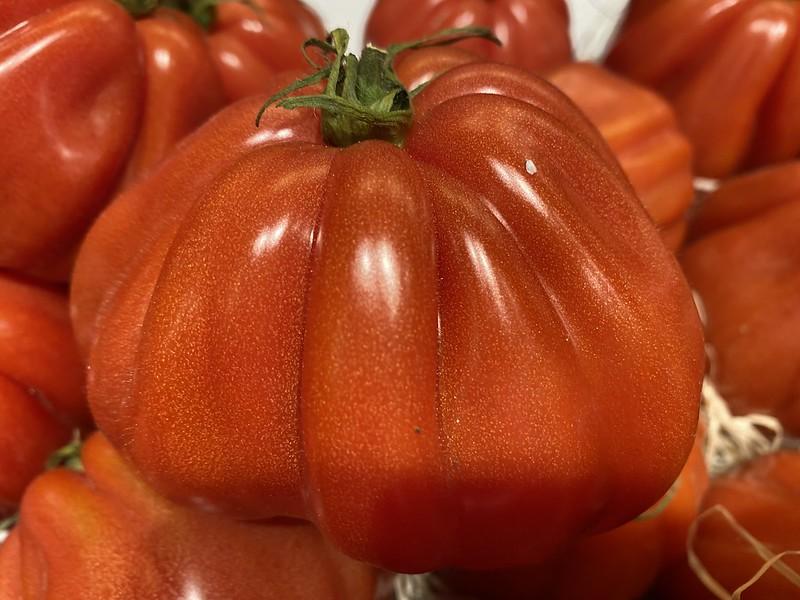 Flesh Tomato