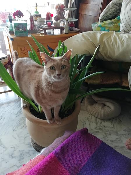 ce chat a la patte verte