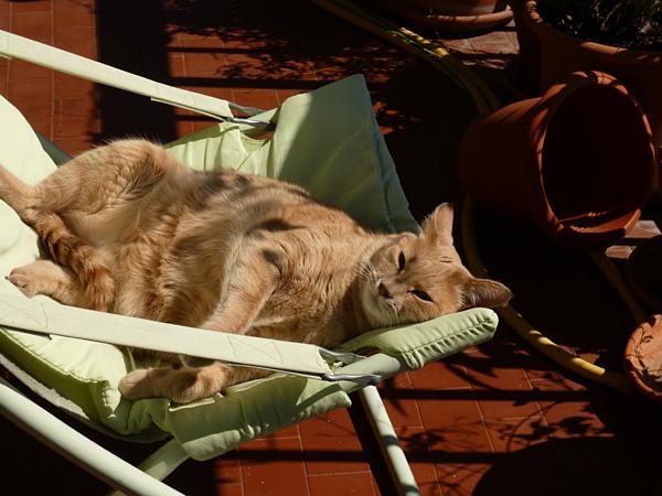 sieste en terrasse