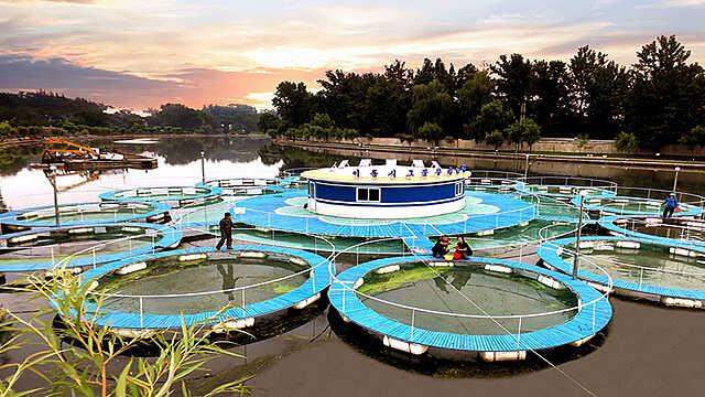 Активизация рыборазведения в КНДР в передвижных сетчатых садках
