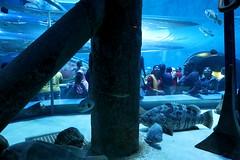 Sharjah  Aquarium UAE
