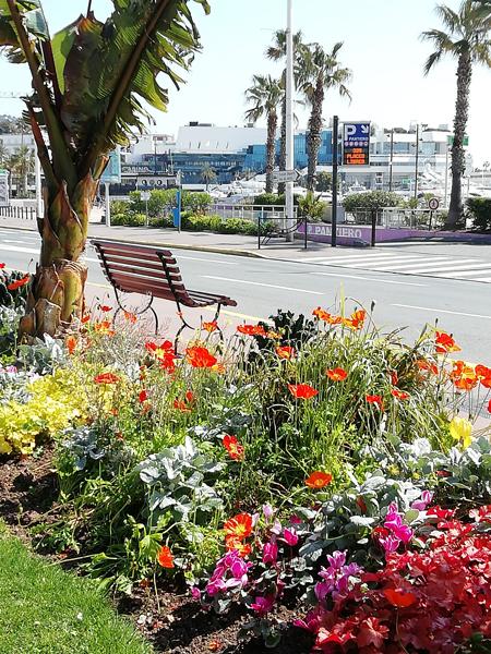 fleurs sur la Croisette