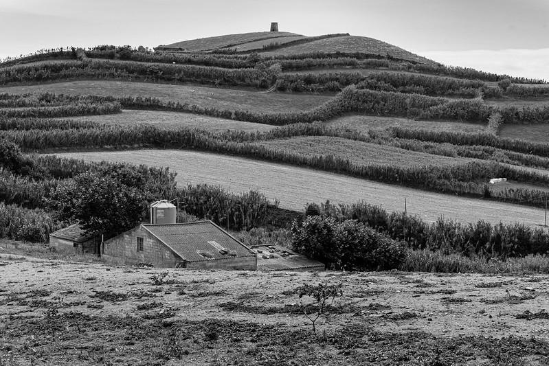 Cows, Windmill Ruin, Barn, Fields