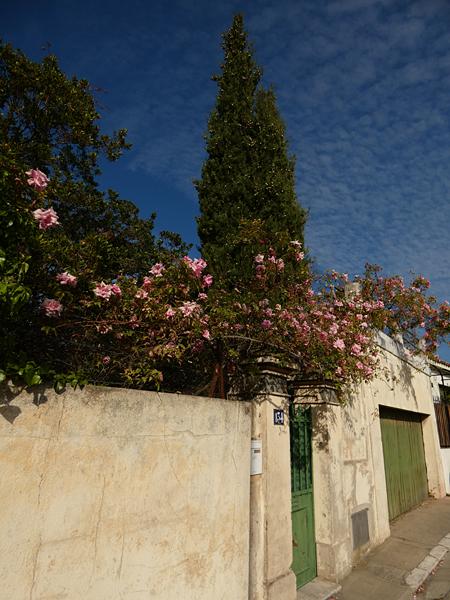 murs de roses