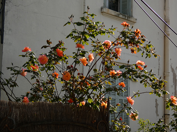 rosier orange
