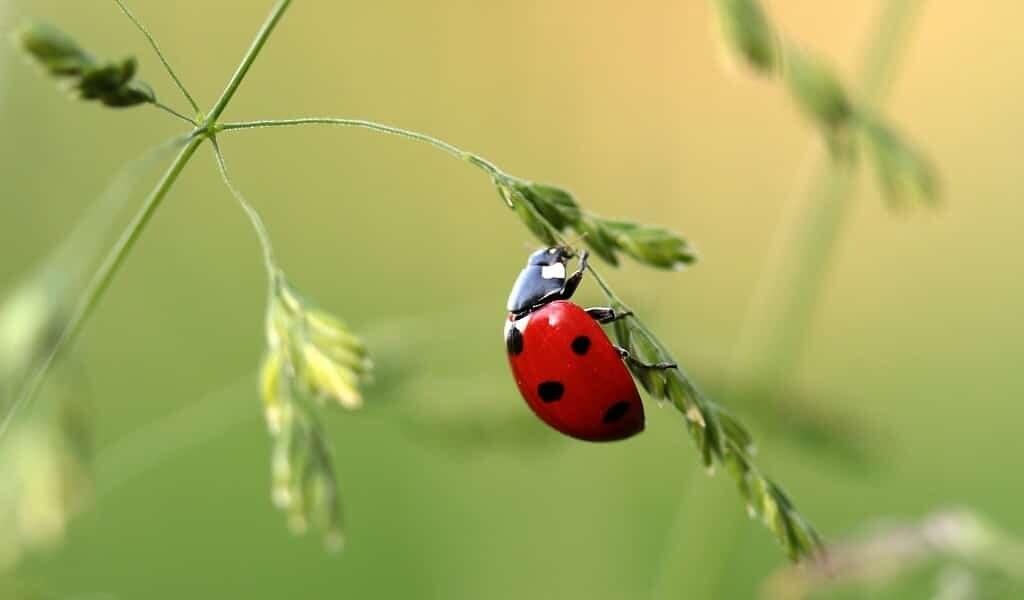 les-rapports-sur-la-mort-des-insectes-sont-exagérés