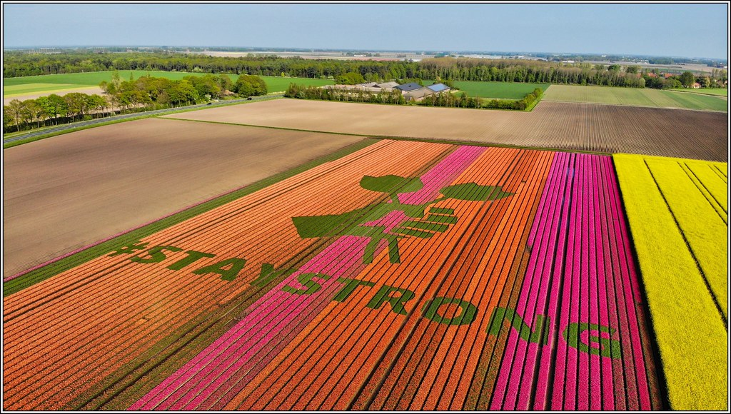# Stay Strong at tulip fields Bant. COVID19 27/04/2020