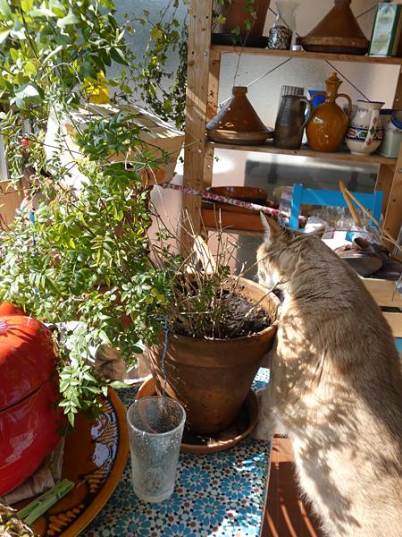 chat en terrasse
