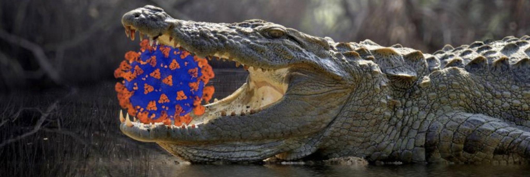 Coronavirus and gator