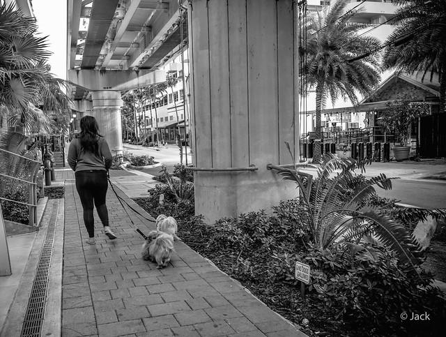 Miami mood - no dogs allowed