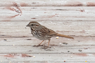 Sparrow | by Stephen Downes