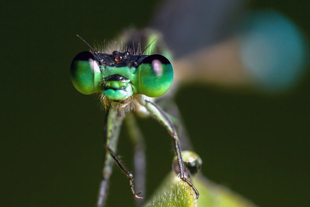 Green Eyes and a Goatee (Cropped Version) - _TNY_3923C
