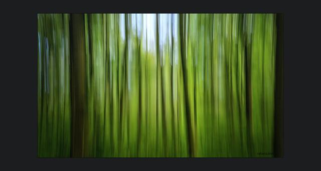 Streifzug durch den Frühlingswald