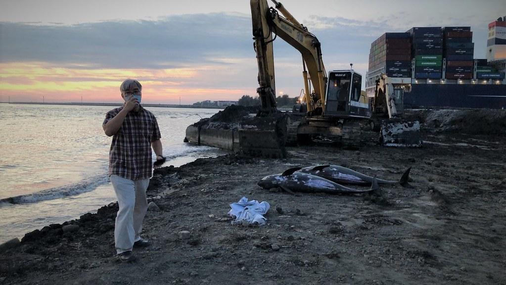雖幾度救援小虎鯨充滿挫折,但成大生科系副教授王浩文認為,即使從死亡的個體透漏的訊息,也要幫助台灣更了解小虎鯨以及環境訊息。圖片來源:海保署