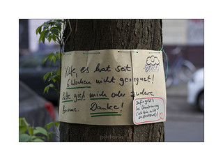 message around a tree