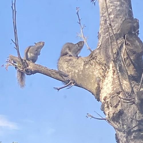 A sad day in squirrelandia, #1
