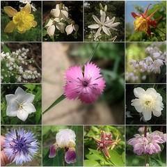 May Garden (2)