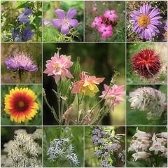 May Garden (1)