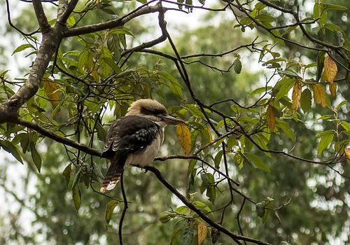 австралия australia melbourne мельбурн пейзаж landscape лес forest эвкалипт eucalyptus dmilokt птица bird ins