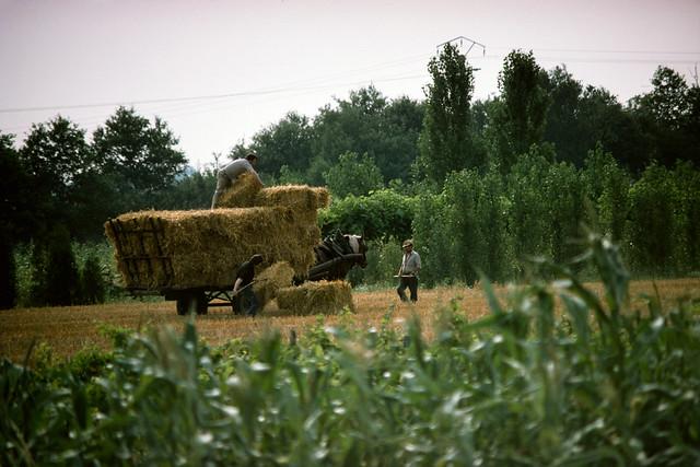 Horse-drawn farm wagon, Chambord f33loire