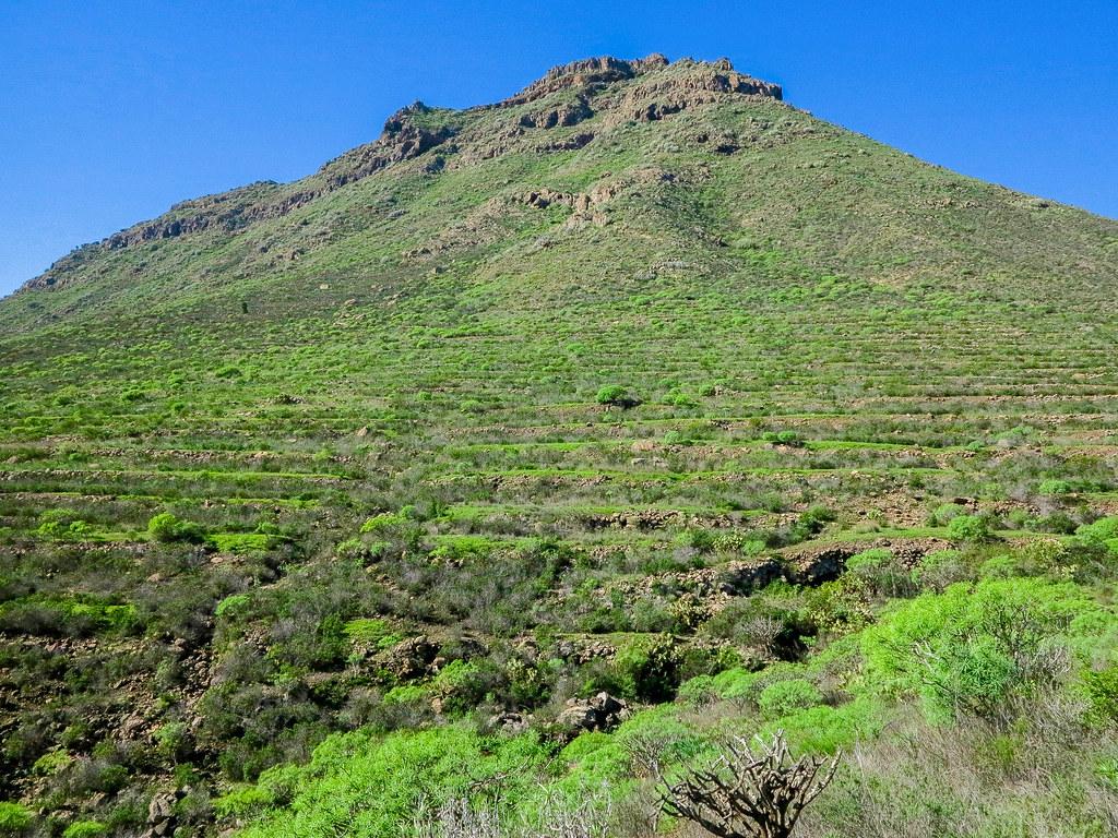 Zonas de cultivo en bancales en el sur de Tenerife