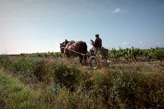 Horse-drawn cart in Vineyard, Loire Valley x24loire