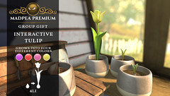 MadPea Premium Group Gift:  Interactive Tulip!