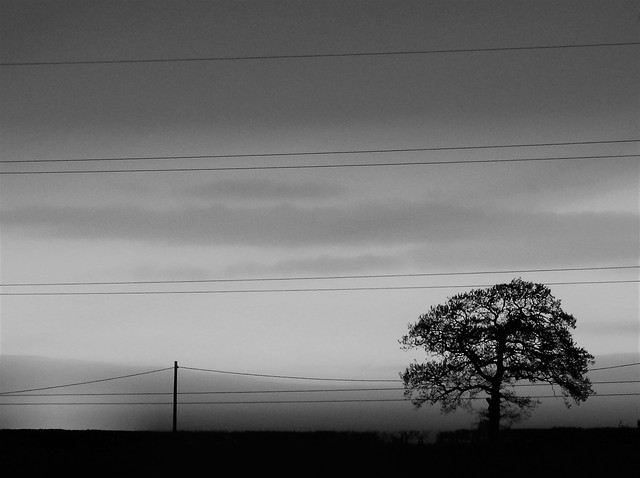 Tree Silhouette Sunset - Black and White