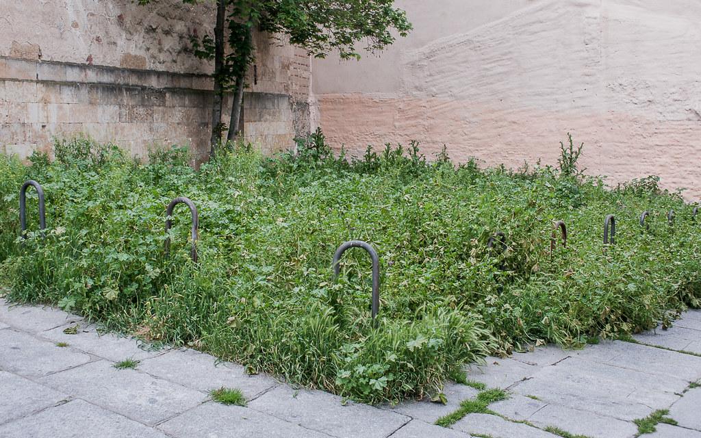 vegetación urbana (2 de 2)