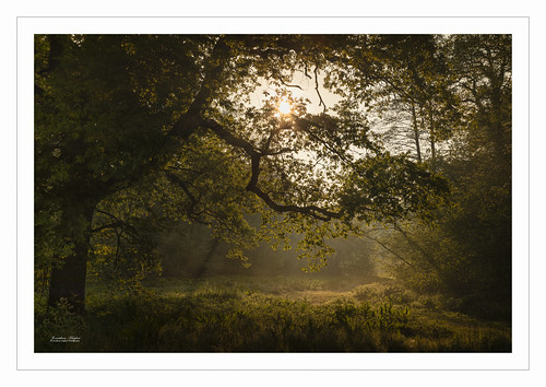 spring woodland nature sunrise atmosphere sussex