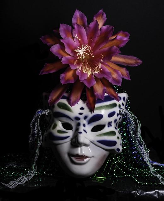 Epiphyllum Fashion Accessory
