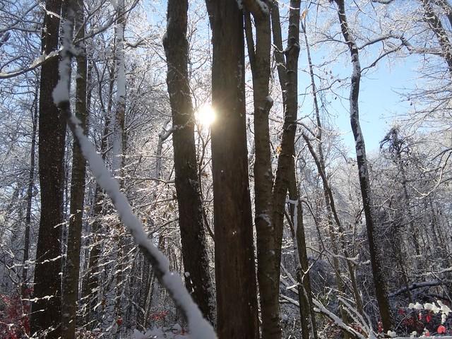 Treelight Original Image