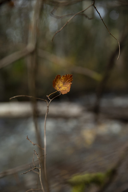 Leaf, Down by the River