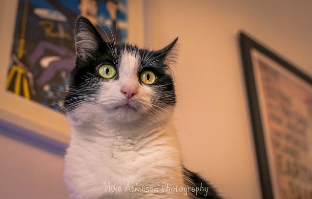 Inquisitive Leila.
