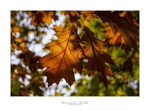 Simply Autumn | by Dominic Scott Photography