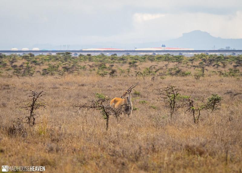 Kenya - 2829