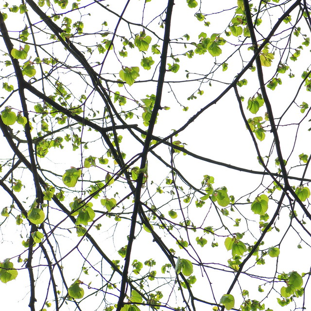 consolation by a linden tree