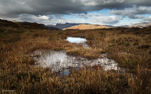 2019 england uk lakedisctrict holmefell views fell mountains bracken autumn landscape nature outdoors langdalepikes hike cumbria puddle water
