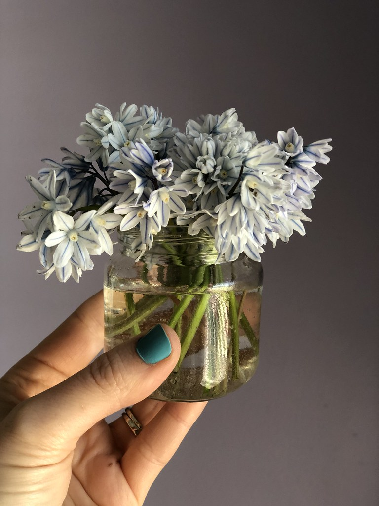 Little striped squill bouquet.